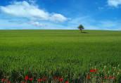 Приобретение земельного участка: проверка экологичности