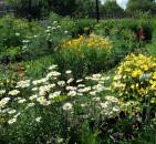 Ландшафтный дизайн на приусадебном участке: выращиваем лекарственные растения