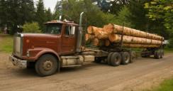 Процесс перевозки древесины в Казани