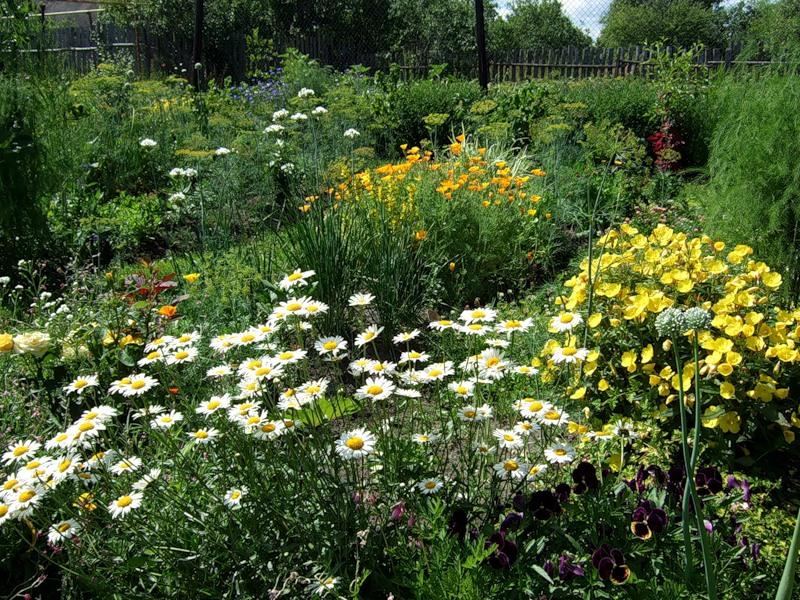 Ромашки в саду дизайн