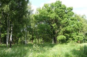 Покупаем земельный участок в поселке «Слобода»